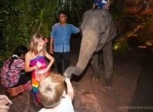 Дети и слоненок на входе в Дино Парк