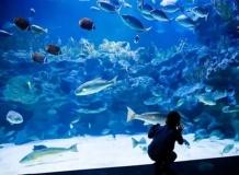 Aquaria в Куала Лумпуре