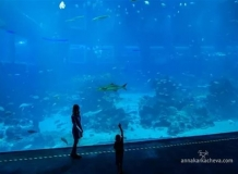 Океанариум Сингапура