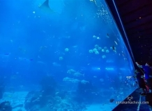 В Океанариуме Сингапура