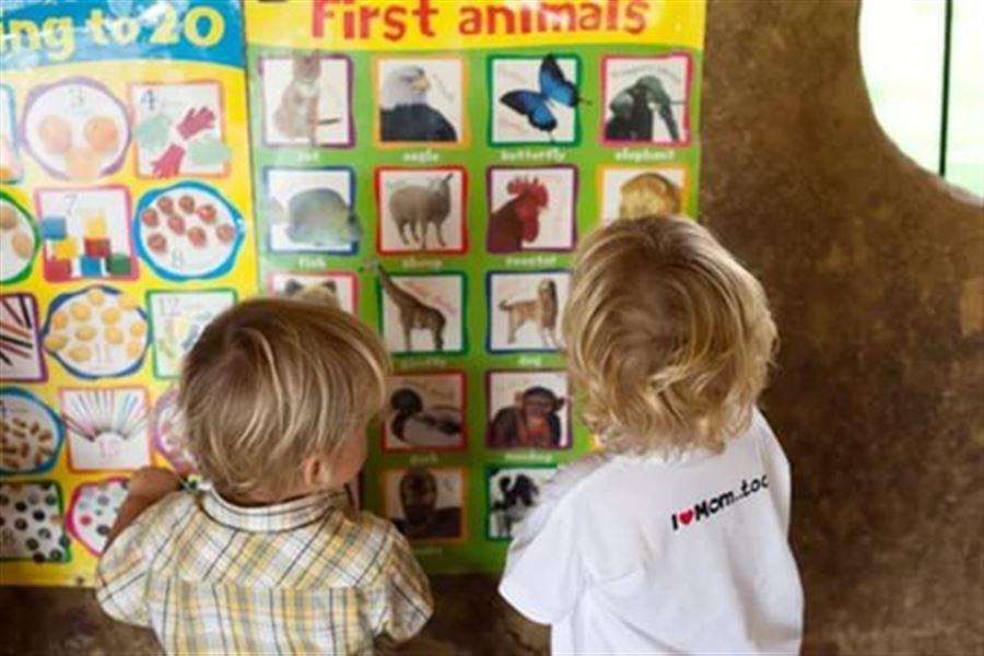 Изучаем животных