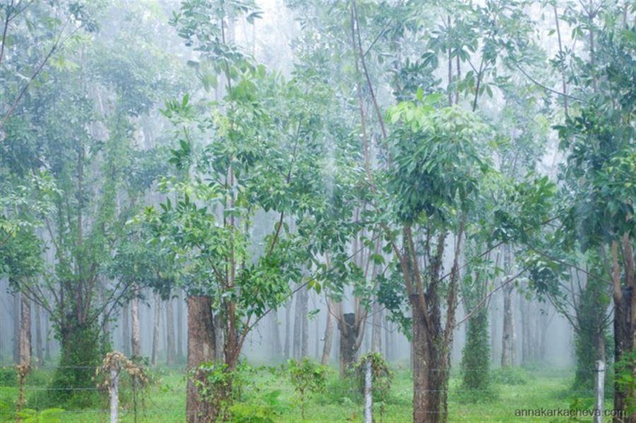 Дождище