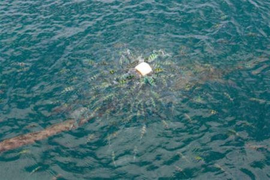 Рыбки едят батон