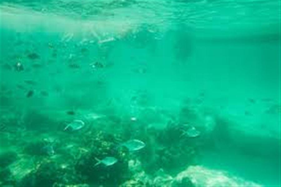 Подводный мир у острова Рача