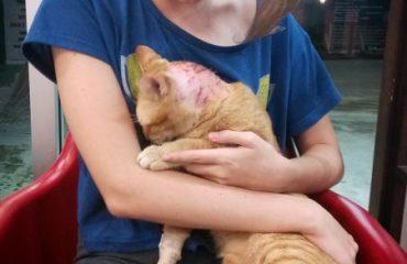 Кот после процедур