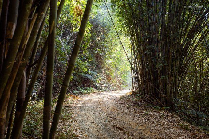 Волшебный лес Таиланда