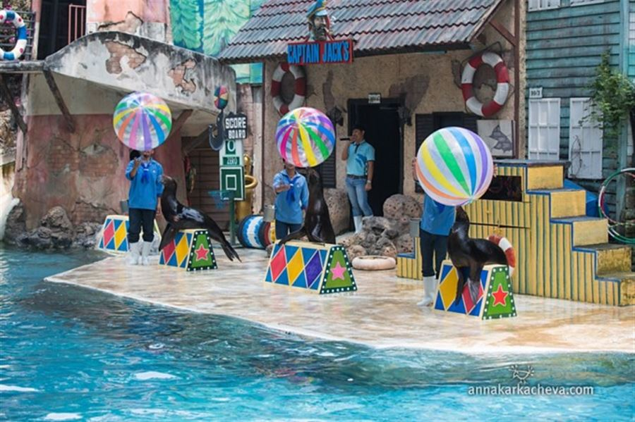 Шоу Морских львов в бангкокском сафари парке