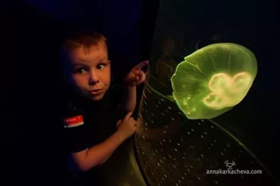 Шурик и медуза