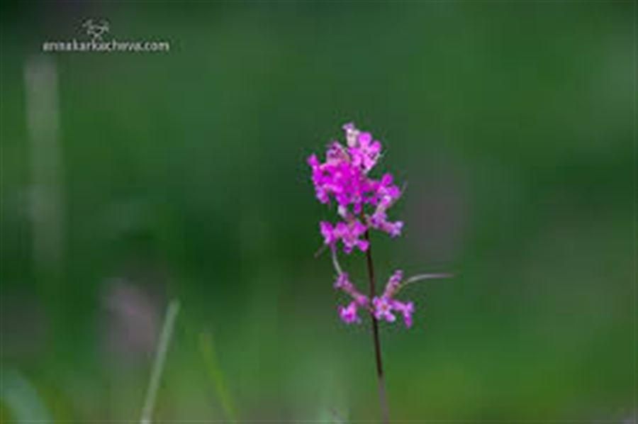 Танины цветы