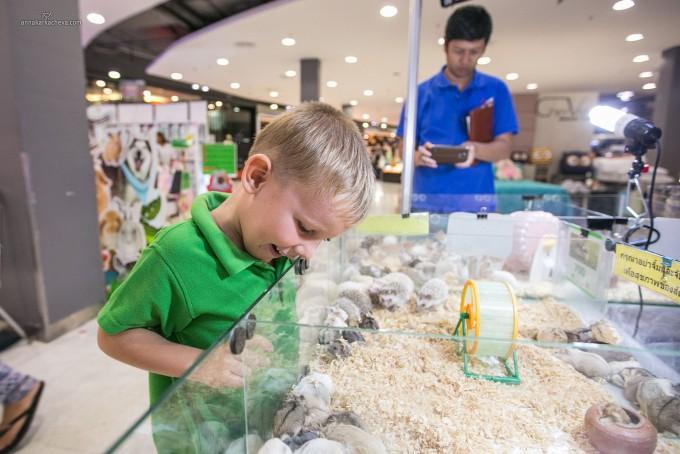 Animal expo Phuket