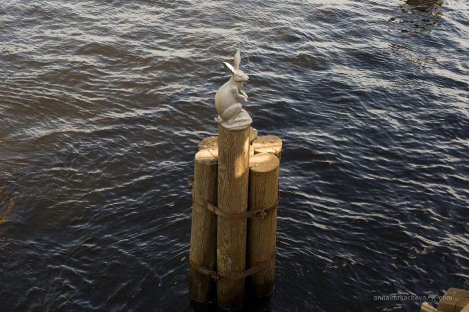Заяц у Петропавловской крепости
