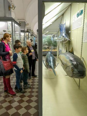 Рыбы в Зоологическом Музее Санкт-Петербург
