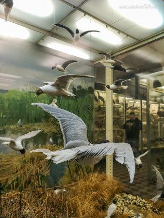 Птицы в Зоологическом Музее Санкт-Петербург