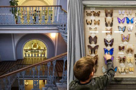 Зоологический Музей в Санкт-Петербурге коллекция бабочек