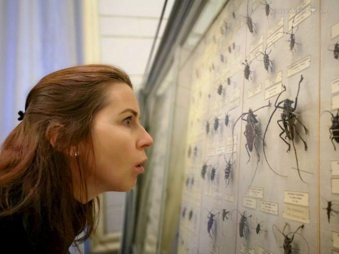 Зоологический Музей в Санкт-Петербурге жуки