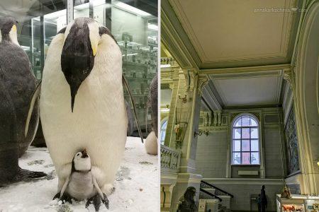 Пингвины в Зоологическом Музее в Санкт-Петербурге