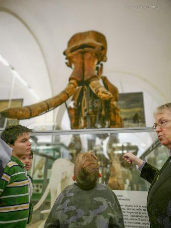 Мамонты в Зоологическом Музее в Санкт-Петербурге